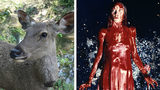 """When college student Sidney Wolfe hit a deer Friday, Oct. 25, 2019, while dressed as """"Carrie,"""" she gave first responders a scare. Pictured at right is actress Sissy Spacek in the iconic prom scene from the 1976 adaptation of Stephen King's novel."""