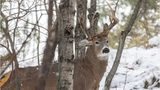 SEE: Rare three-antlered deer caught on camera