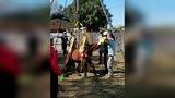 A Florida woman was accused of animal cruelty after investigators found seven malnourished horses at her house. One of the animals later died.
