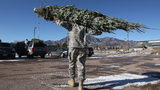 FILE PHOTO: A U.S. Army soldier carries off a free Christmas tree on December 7, 2011 at Fort Carson in Colorado Springs, Colorado as part of the annual Trees for Troops program.